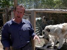 Brit slaagt in evacuatie van ruim 150 honden en katten uit Kaboel