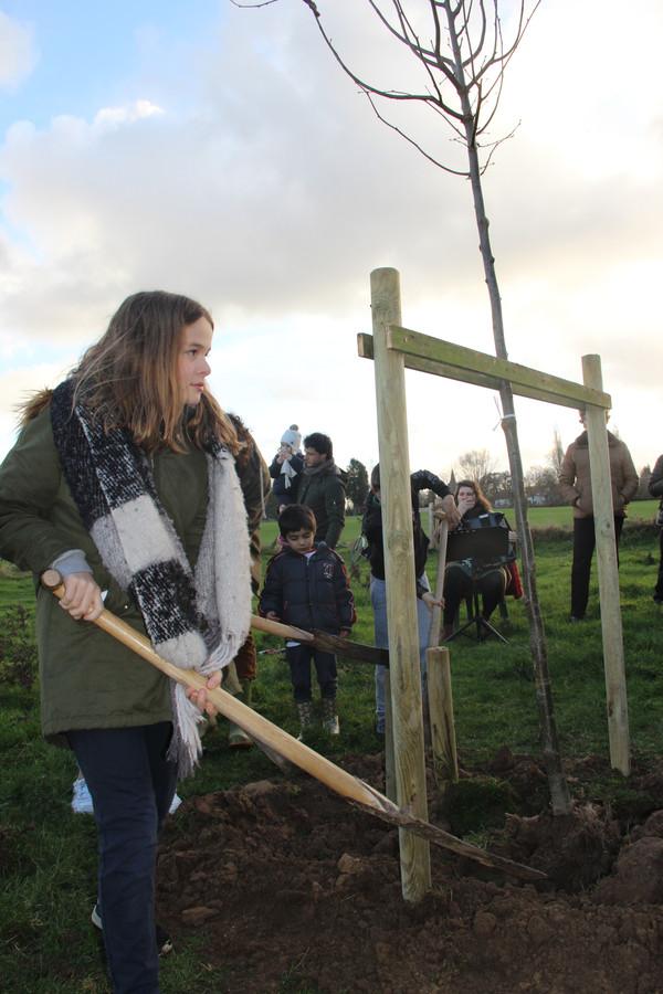 Archiefbeeld - Groen Horebeke wil per inwoner een extra boom in de gemeente.