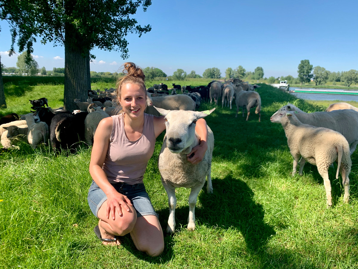 Henrieke van den Dool (23) is herderin en hoedt haar schapen in de vesting Nieuwpoort.