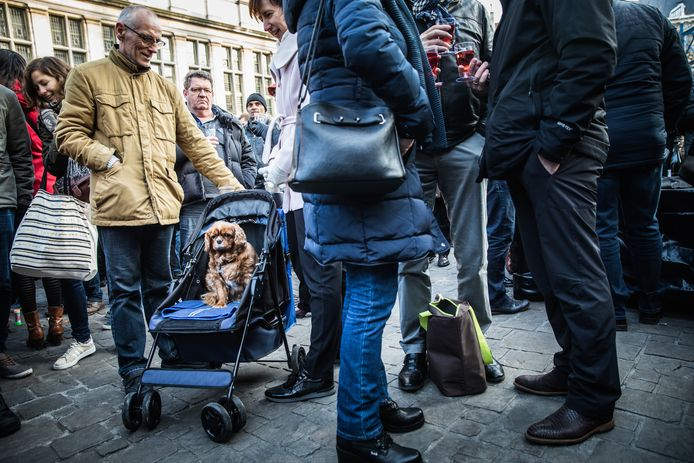 Is Gent een hondenstad?