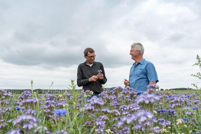Agrariër André Slootmaker van de stichting Zonnestraal en Helle van der Roest van de Imkervereniging Schouwen-Duiveland in gesprek in een bloemrijke akkerrand