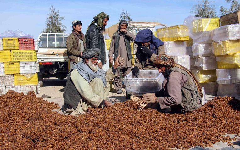 Afghaanse mannen sorteren rozijnen bedoeld voor export in Kandahar, 15 januari 2019, Afghanistan.  Beeld EPA