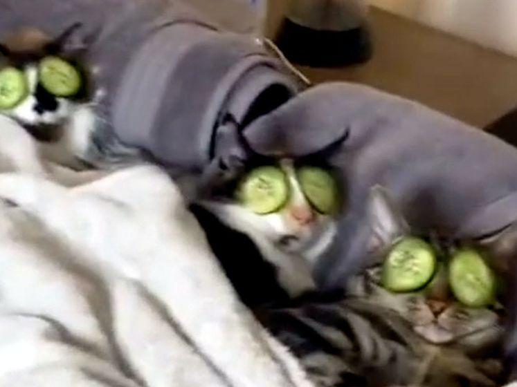 Geen kat zo verwend als deze drie!
