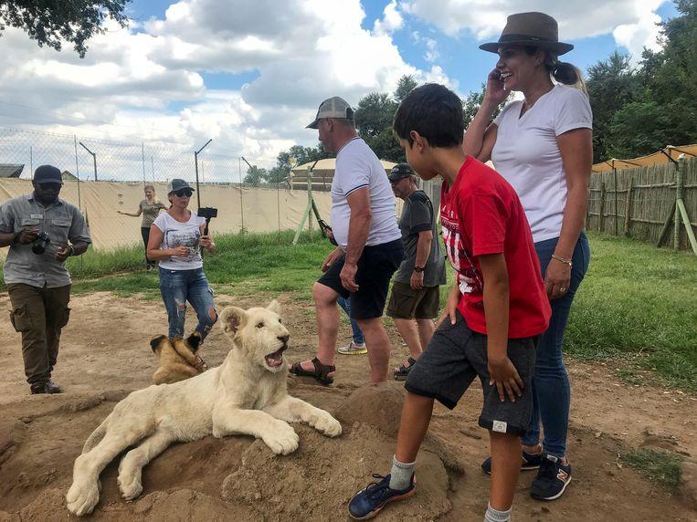 Toeristen bij een leeuwenwelp in het safaripark bij Johannesburg, Zuid-Afrika.  Beeld REUTERS