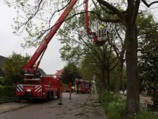 Storm velt bomen: brandweer op  verschillende plekken in actie