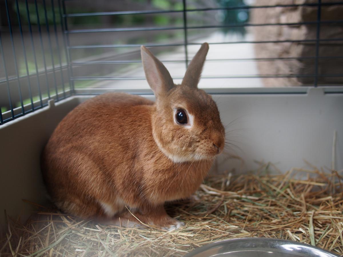 Een nieuwe wet regelt dat dieren vanaf 1 januari 2023 geen pijn of ongemak meer mogen hebben om in een stal, hok of kooi gehouden te kunnen worden.