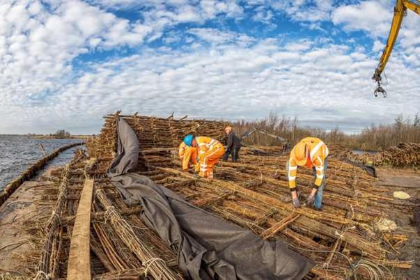 Werkers van griendhandel Van Aalsburg uit Hellouw in de weer met wiepen