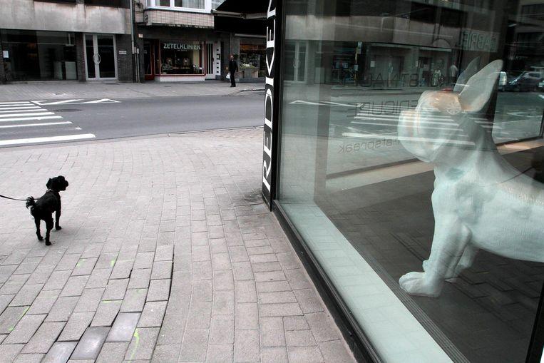 Starend naar het raam vormt het zwarte hondje links de tegenpool van zijn witte, statische soortgenoot rechts. Hoe zou dat voelen, vrij rondlopen? Beeld Henk Deleu