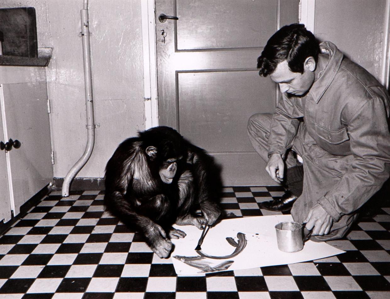 Onderzoeker Wouter van der Schaar geeft chinpansee Hilda pensel en verf (Artis, Amsterdam 1966)