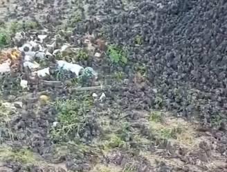 Mysterie van vogels die doodvallen boven kerkhof opgelost