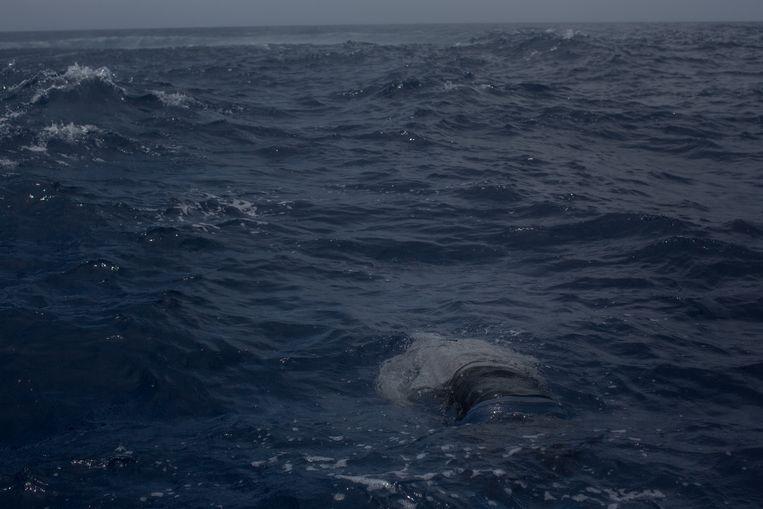 Het lichaam van een verdronken migrant drijft in het water voor de kust van Lampedusa, waar op 24 mei een boot met meer dan 500 mensen aan boord kapseisde.   Beeld Getty Images