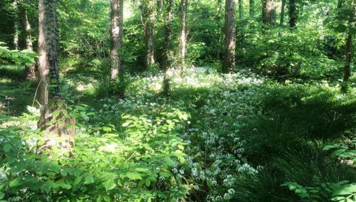 Bonheiden lanceert platform Natuurlijke Tuinen