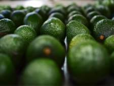 Honger naar avocado's nog lang niet gestild: Nederland spil in de wereldhandel