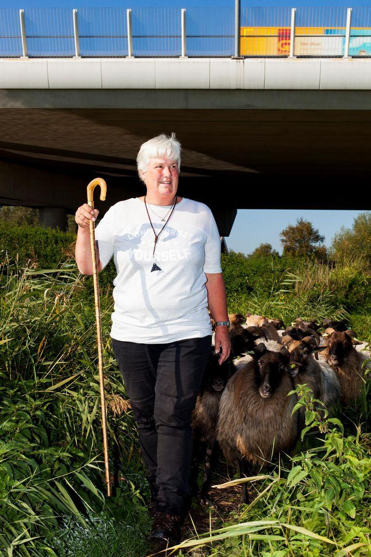Sylvia Passchier: 'Je moet je schapen lezen, dan zie je wanneer er iets mis is' Beeld Renate Beense
