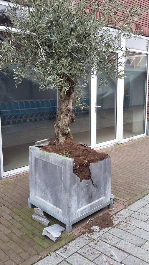 Een vernielde boombak.
