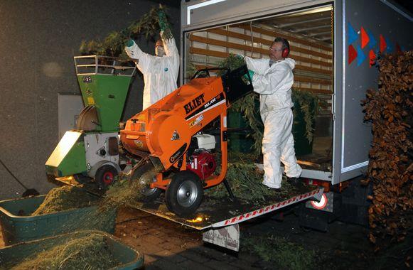 Cannabisplantage in loods aan Turfputten.De cannabisplanten worden opgeruimd.De veplanten worden verhakseld - Olen - 24-11-2017 - Tekst : WDH