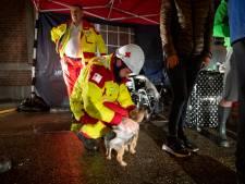 """La solidarité s'organise aussi pour venir en aide aux animaux: """"Des citoyens en détresse ont dû les abandonner"""""""