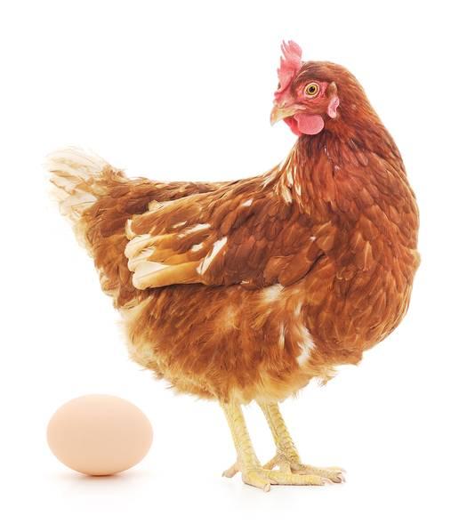 Wordt gedrag vooral bepaald door genen, of door opvoeding en omgeving? Het is volgens Emma Sprooten geen kip of ei-discussie, maar één grote brij van deze twee.