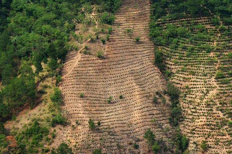 Ontbossing en droogte in Guatemala. Beeld AFP