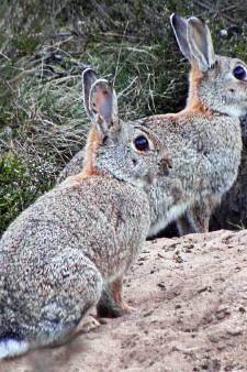 Nergens een konijn of haas te zien