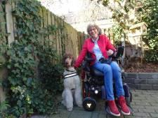 Help hulphond-pup socialiseren bij Zorghond Nederland in Gemonde: 'Het mes snijdt van twee kanten'