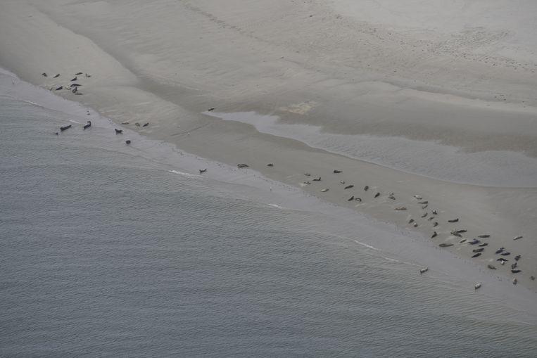 Sophie Brasseur telt zeehonden vanuit de lucht.  Beeld Sophie Brasseur