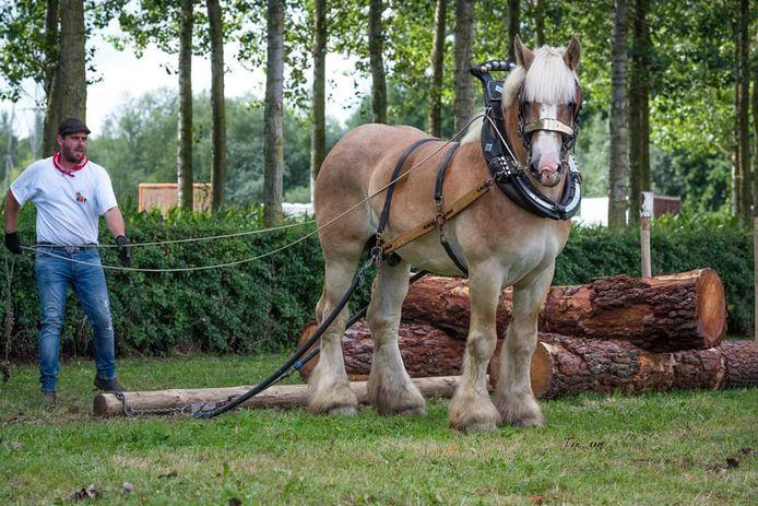 Er staan shows van trekpaarden op het programma.