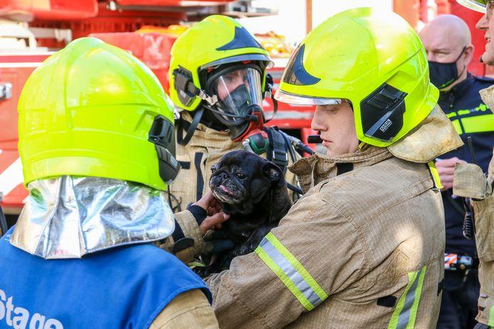 De brandweer redde ook vier katten en een hond.