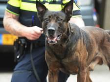 Politiehond vindt jonge overvaller in container na straatroof in Utrecht