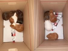 Acht cavia's in doos gedumpt in Oss