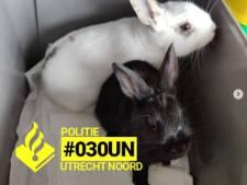 Konijnen gedumpt in Utrecht, maar politie laat het er niet bij zitten