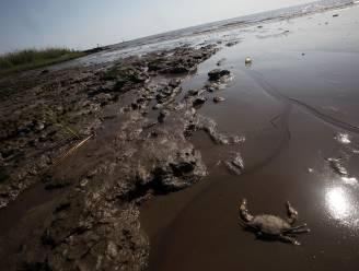 """""""Olieramp Golf van Mexico oorzaak van misvormde vis"""""""