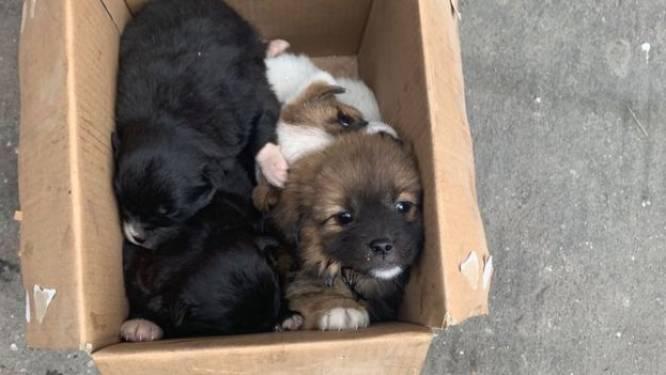 Les chiens abandonnés en masse à cause du virus et des quarantaines