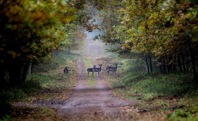 Mark B. schoot volgens het Openbaar Ministerie zonder geldige jachtakte op dieren in natuurgebied Kootwijk-Loobos.