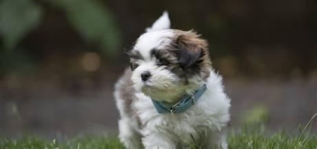 Wandelaar vindt onthoofd hondje zonder voorpoten in park