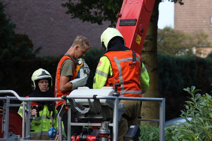 De brandweer schoot met een hoogwerker te hulp om de ara uit de boom te bevrijden.