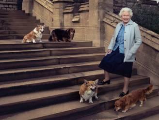 De Queen schreef hilarische brieven in naam van haar corgi's aan een andere hond