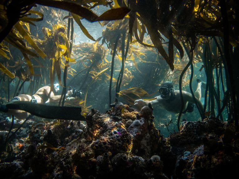 Craig Foster (rechts) wordt gefilmd tijdens de opnamen van My Octopus Teacher in het kelpwoud bij Kaapstad. Beeld Faine Loubser