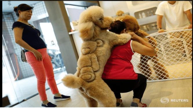 Dierenkapsalon tovert katten en honden om tot dino's, knuffelberen en Hello Kitty