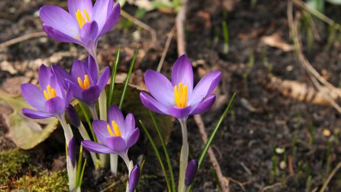 Lente in februari: tot 17 graden en zonnig dit weekend