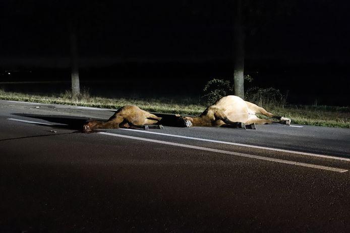 Drie losgebroken pony's hebben woensdagochtend de dood gevonden na een aanrijding op de N264 bij Haps