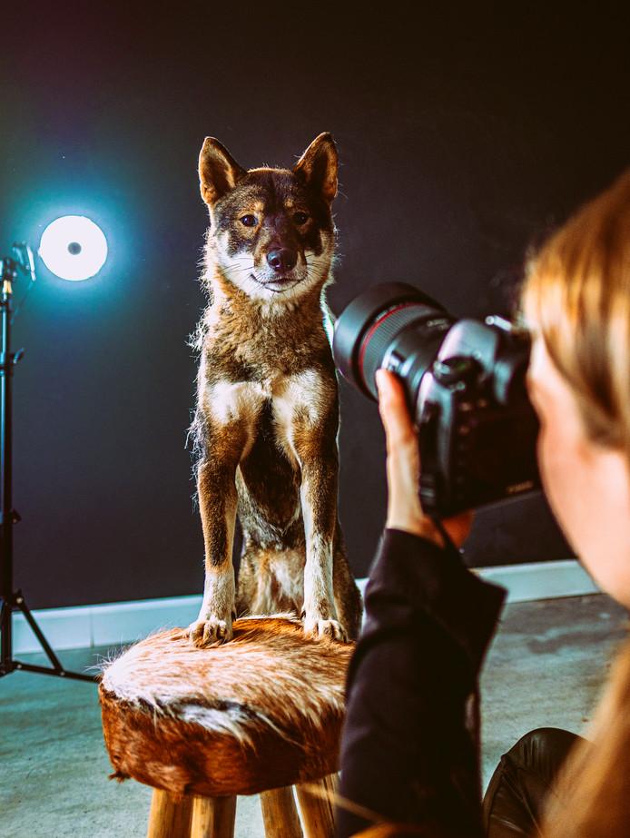 Hond Yuka poseert voor de lens van Pia Cuijpers