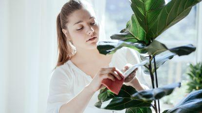 Krullen de bladeren van je kamerplanten op? Dit is er mis