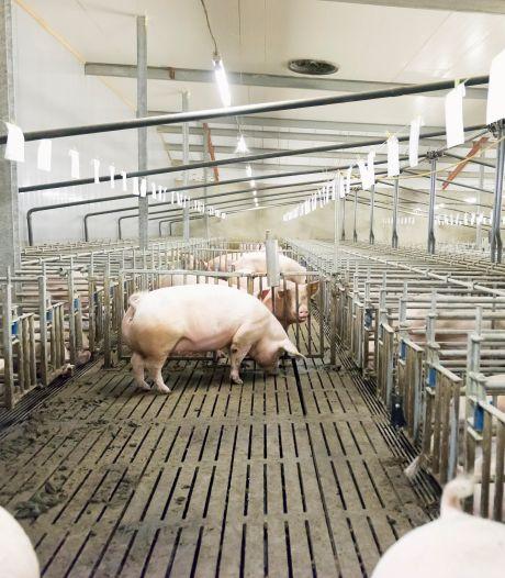 Nieuw advies betekent einde voor 'vrijwel alle' boeren in Gelderse Vallei, Agractie furieus