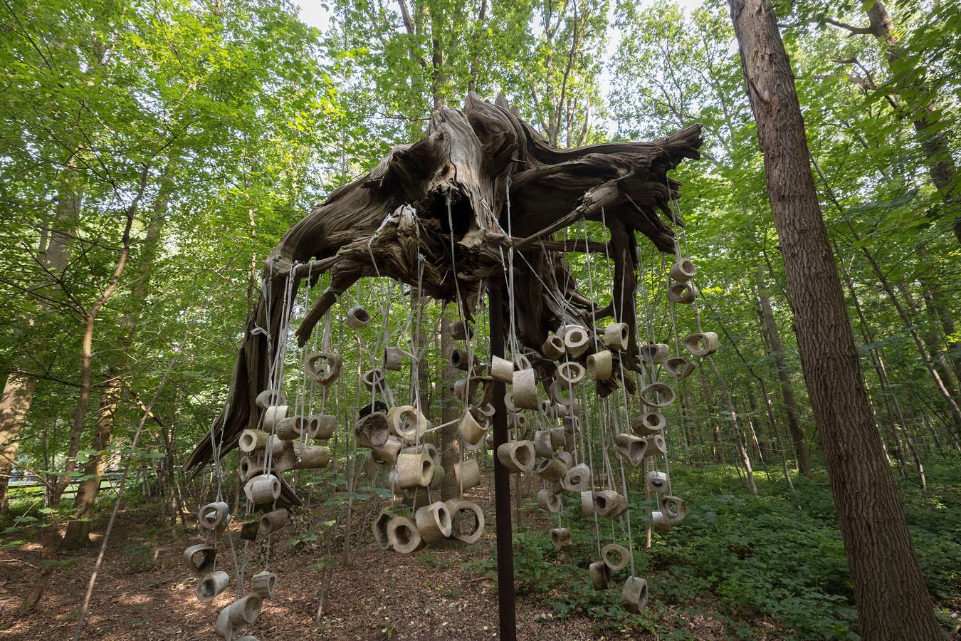 Het vrouwenbos op het Breinpad.