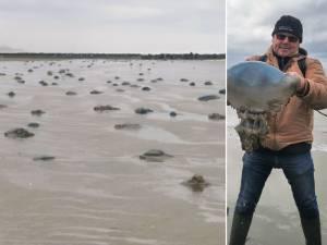 Une partie de la Côte parsemée de méduses à cause de la tempête Aurore