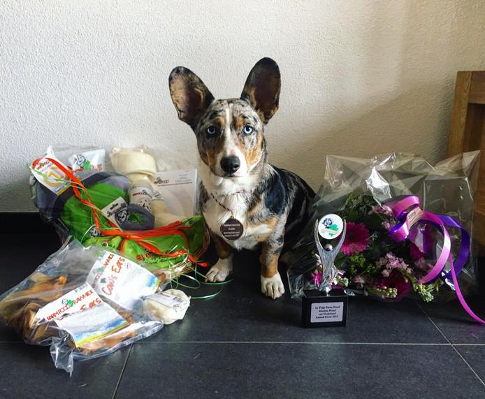 Bolt uit Reusel is verkozen tot 'mooiste hond van Nederland'.