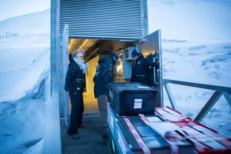 Het is niet de bedoeling dat de deelnemende landen komen 'winkelen' op Spitsbergen, maar dat ze de zaden aan elkaar leveren via hun nationale zadenbanken. Foto: Julius Schrank. Beeld