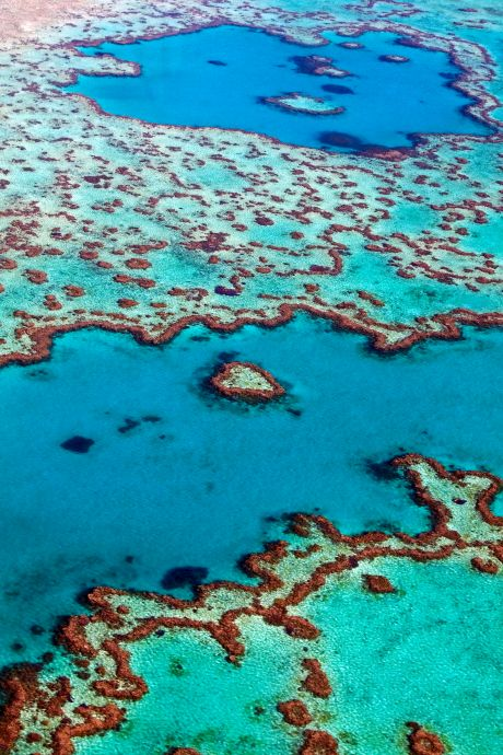 Unesco wil Great Barrier Reef stempel 'in gevaar' geven, Australië noemt dat politieke bemoeienis