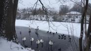 IN BEELD: Tivoli nòg mooier onder een laagje sneeuw